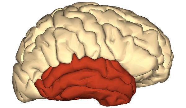 Anatomography, via Wikimedia Commons (CC BY-SA 2.1 jp)
