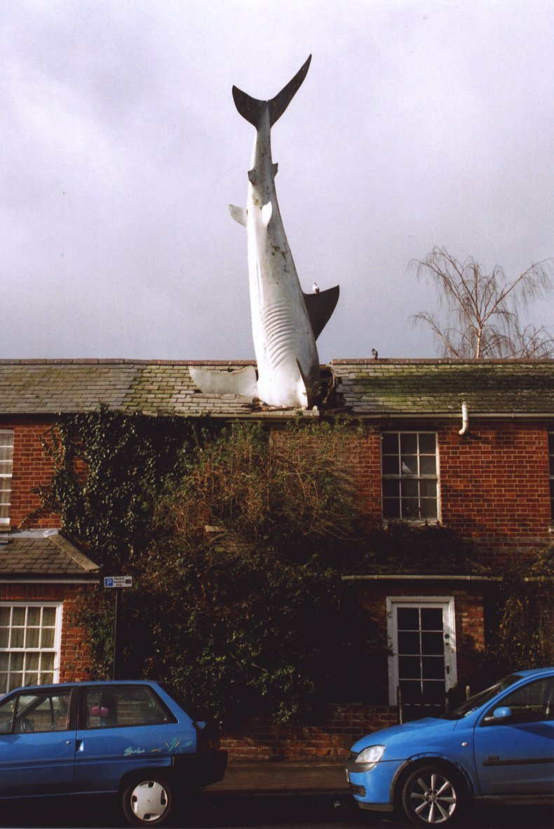 """Headingtonsharkfront"" by Henry Flower at the English language Wikipedia. Licensed under CC BY-SA 3.0 via Commons"
